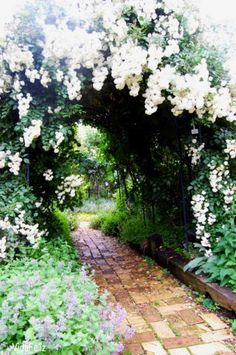 ~ lovely walkway