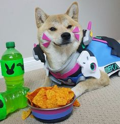 Adorable 'Overwatch' Doge is winning at cosplay in 2016