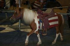 sad pony