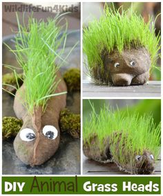 How to Make an Animal Grass Head | Wildlife Fun 4 Kids