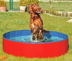 FurryFriends Foldable Dog Pool Folding Dog / Cat Bath Tub Collapsible Pet Spa Whelping Box Christmas Gift Large 12 Red * Visit the image link more details. (This is an affiliate link) Large Dog Crate, Large Dogs, Cat Bath, Bath Tub, Spa Tub, Whelping Box, Pet Spa, Aquarium, Dog Cat
