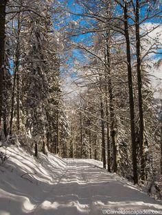 Une journée d'hiver aux Rousses, dans le Jura http://www.tourisme.fr/1257/office-de-tourisme-les-rousses.htm