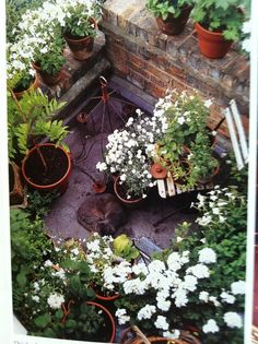 Rooftop garden, London.  Reminds me of my late grand-mother's terrace in Calcutta.