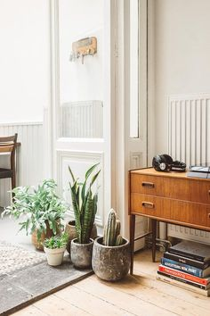 Group of plants on the floor of the relaxed Antwerp home of photographer Kimberley Dhollander & Philippe Corthout (Phili). Inside Antwerp.
