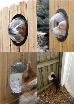 """Every dog should have a point of view! http://theownerbuildernetwork.co/uzaj Dogs are very curious; they want to know what's happening out there! The """"Pet Peek"""" window can easily make it possible."""