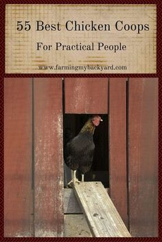 Raising chickens has gained a lot of popularity over the past few years. If you take proper care of your chickens, you will have fresh eggs regularly. You need a chicken coop to raise chickens properly. Use these chicken coop essentials so that you can. Portable Chicken Coop, Best Chicken Coop, Chicken Coop Plans, Building A Chicken Coop, Chicken Coops, Farm Chicken, Chicken Houses, City Chicken, Clean Chicken