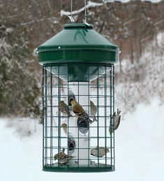 Heavy-duty mixed seed feeder has a gridded cage surrounding the feeding tube to keep greedy squirrels out while letting your colorful songbirds in.