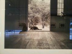 Houston Center for Photography #museumdistrict #houston #followthelion