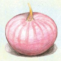 Onion : Violet De Galmi - Flat, thick high quality pinkish-purple bulbs keep well, very flavorful