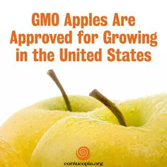 The US on Friday approved the commercial planting of genetically engineered apples that are resistant to turning brown when sliced or bruised. More here: http://www.cornucopia.org/2015/02/g-m-o-apples-approved-growing-united-states #GMOs #GMApple #arcticapple The Cornucopia Institute