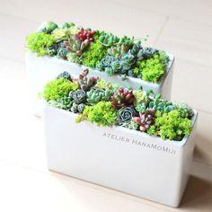 初めてでも安心だよ。多肉植物の育て方・寄せ植え・増やし方まとめ | キナリノ