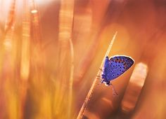 Photograph Blue Princess by Marcsi Kesjarne on 500px