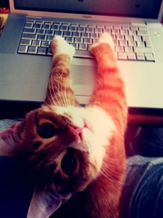 hi lol..) im so busy right now , whats up?))