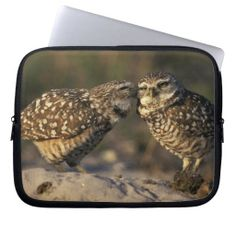 >>>This Deals          	Florida, Fort Myers. Burrowing Owl pair bonding Laptop Sleeve           	Florida, Fort Myers. Burrowing Owl pair bonding Laptop Sleeve in each seller & make purchase online for cheap. Choose the best price and best promotion as you thing Secure Checkout you can trust Buy ...Cleck Hot Deals >>> http://www.zazzle.com/florida_fort_myers_burrowing_owl_pair_bonding_laptop_sleeve-124991710034474078?rf=238627982471231924&zbar=1&tc=terrest
