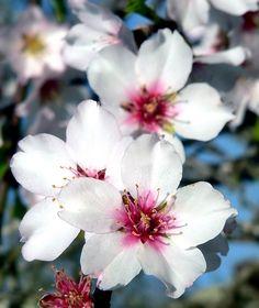 Resultado de imagem para portuguese flowers