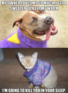 How pets react to sweaters…@Alicia Franklin this makes me think of you!