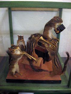 Taxidermy Chipmunk Band