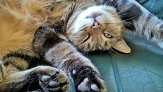10 sinais de dor em gatos. Costumamos pensar que os gatos são animais muito resistentes. Muitos de nós quase que lhes atribuímos poderes sobrenaturais, como por exemplo dizer que os gatos têm sete vidas, no...