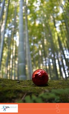 The tranquility of Japan's bamboo forests is appreciated by people as the year draws to a close. Urbanites take time out in the tranquil surroundings, restoring energy levels ready for the coming year.
