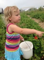 U-Pick Strawberry Picking at Gallrein Farms in Shelbyville, KY - Louisville Family Fun Stuff To Do, Fun Stuff, Things To Do, Strawberry Picking, Picture Places, Close To Home, Farms, Summer Fun, Kentucky