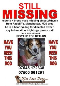 Have u seen Kim? Pls look at his pic #HelpFindThem  He is a special hearing dog 4 his owner Stolen 2011 #HelpFindThem pic.twitter.com/J3gZ2bI02l