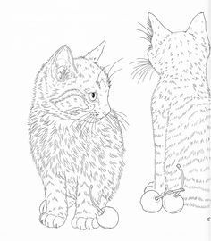 Harmony Of Nature Adult Coloring Book Pg 43