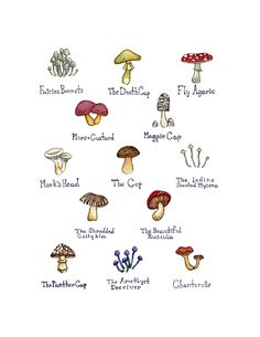 Mushrooms Field Guide Art Print. This field guide classification chart is done in watercolor, and features a selection of lovely mushrooms. Mushrooms included are: Chanterelle, Fairies Bonnets, Fly Agaric, Magpie Cap, Monk's Head, Plums and Custard, The Amethyst Deceiver, The Beautiful Russula, The Cep, The Death Cap, The Iodine Scented Mycena, The Panther Cap, and The Shredded Collybia. This print is signed. It is printed on 8.5x11 Professional Canon Luster paper. The print has a white...