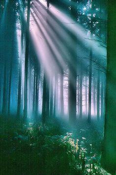 Une partie de la forêt de la montagne Ardennes, ces bois offrent une vue magnifique positive. Il suffit de regarder l'image!