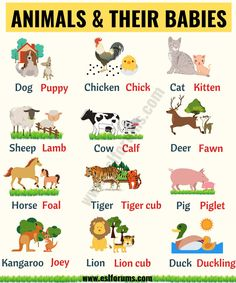 Cute Baby Animals: Learn Popular Animals and Their Babies! - ESL Forums - Helene Schwabenland - Cute Baby Animals: Learn Popular Animals and Their Babies! - ESL Forums Cute Baby Animals: Learn Popular Animals and Their Babies! Grammar For Kids, Teaching English Grammar, English Writing Skills, English Vocabulary Words, Learn English Words, English Phrases, English Language Learning, Learning English For Kids, English Worksheets For Kids