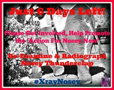 Action For Nosey Now - ***Please Help Promote Our Re-examine & Radiograph Nosey Thunderclap***