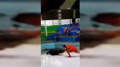 VÍDEO | Domador salvó su mano tras ataque de cocodrilo...