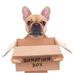 Charitable Donations to Dog Rescues/Shelters: It would be easy to assume that the costs of adopting a dog from a registered non-profit, would be deductible – the assumption would be wrong. The cost to adopt a dog is not deductible. Dog Rescue Shelters, Rescue Dogs, Animal Rescue, Animal Shelter Donations, Animal Shelters, Private Adoption, Natural Disasters, Humane Society, Fur Babies