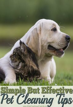 My pets can create a big mess, but with these tips and strategies clean up is a breeze.  No yucky smells, no messes either.   Great tips!