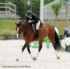 photo by Mollie Bailey Adrienne Iverson and Fandango HX| The Chronicle of the Horse