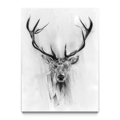 Red Deer by Alexis Marcou - Fine Art Prints available in a variety of formats at Eyes On Walls