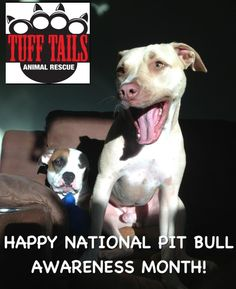 Oct is pit bull awareness month!