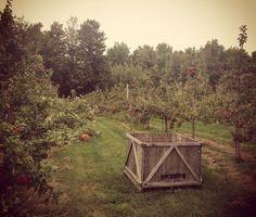 Trouvailles Pinterest: Le temps des pommes