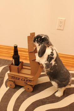 The Invention That Will Teach Your Bunny to Bring You Beer