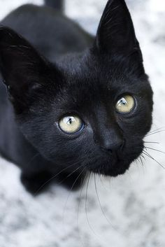 Black cat What a cute face. Incensewoman   ...........click here to find out more     googydog.com