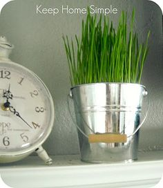 awesome spring & summer decor using wheat grass & dollar pails