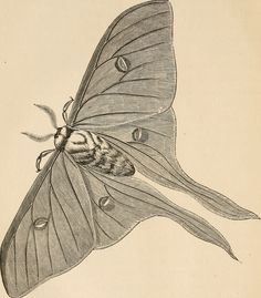 """Image from page 155 of """"The butterfly hunters"""" (1868) 