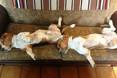 Lazy and Weird by Ree Drummond / The Pioneer Woman, via Flickr