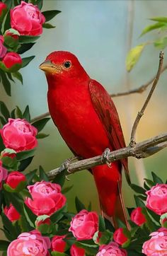 exotic flowers names and pictures All Birds, Cute Birds, Pretty Birds, Beautiful Birds, Animals Beautiful, Beautiful Creatures, Exotic Birds, Colorful Birds, Exotic Flowers