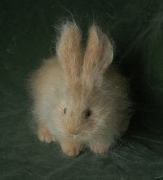 yellow rabbit by Natasha Fadeeva, via Flickr
