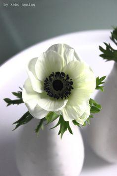 White Anemone, Anemone Flower, Anemone Wedding, Vase, Spring Flowers, Flower Power, Decor Styles, Anemones, Ranunculus