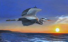 Great Blue Heron Sunrise Flight - Charles Wallis
