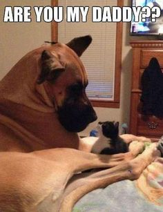 Daddy? Big Dogs, Large Dogs, I Love Dogs, Cute Dogs, Dogs And Puppies, Doggies, Funny Animals, Cute Animals, Animal Memes