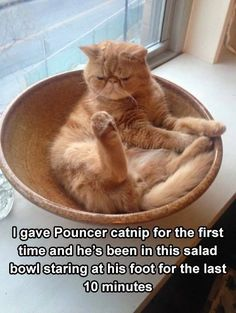 ** Pouncer must be brain-damaged.