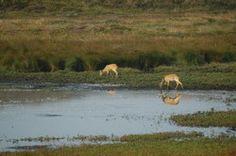 Nationalpark Thy – Danmarks største vildmark