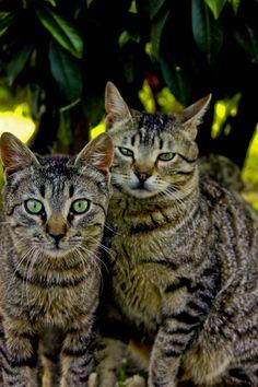 Twins.. by Serdar Gür, via 500px